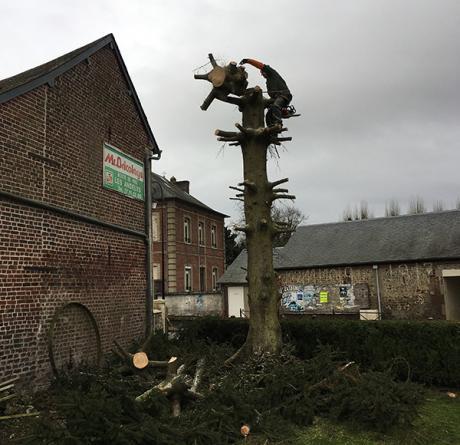 abattage d'arbres à Rouen