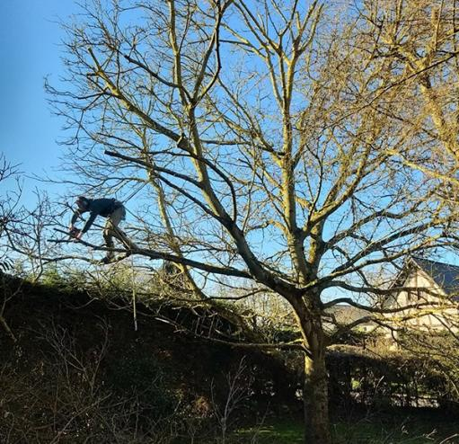 Elagage d'arbres à Evreux