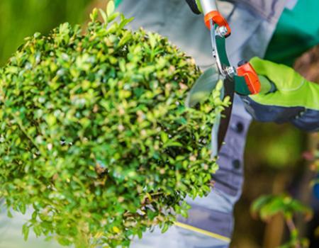 Actualités de votre paysagiste à Ailly, près d'Evreux