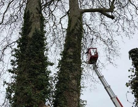 Profiter de l'hiver en faisant élaguer vos arbres par LD PAYSAGES, situé à AILLY